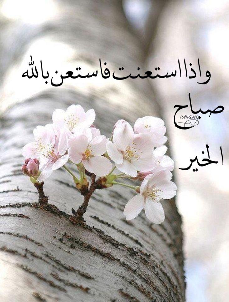 صورة اجمل صباح الخير , احلى صباح الخير للاحباب