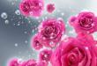 بالصور صور خلفيات ورد , اجمل صور خلفيات ورد وزهور مميزة 5778 1 110x75