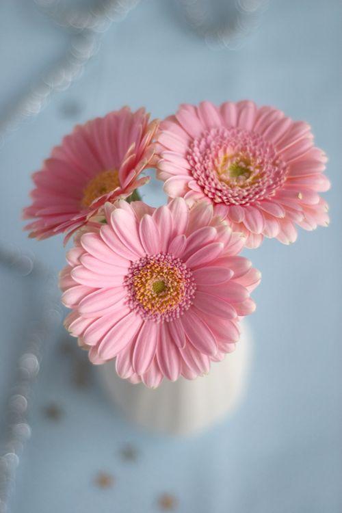 بالصور صور خلفيات ورد , اجمل صور خلفيات ورد وزهور مميزة 5778 2