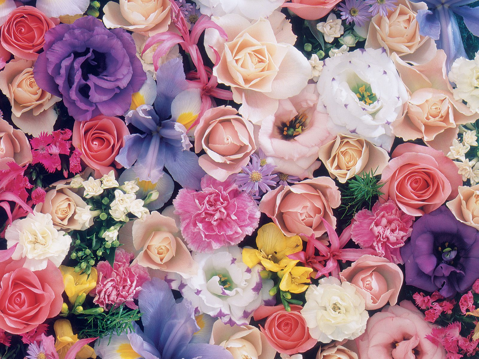 بالصور صور خلفيات ورد , اجمل صور خلفيات ورد وزهور مميزة 5778 3