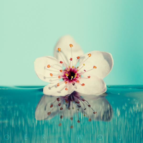 بالصور صور خلفيات ورد , اجمل صور خلفيات ورد وزهور مميزة 5778 6