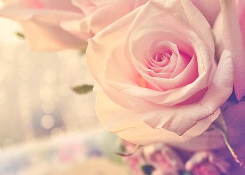 بالصور صور خلفيات ورد , اجمل صور خلفيات ورد وزهور مميزة 5778 7