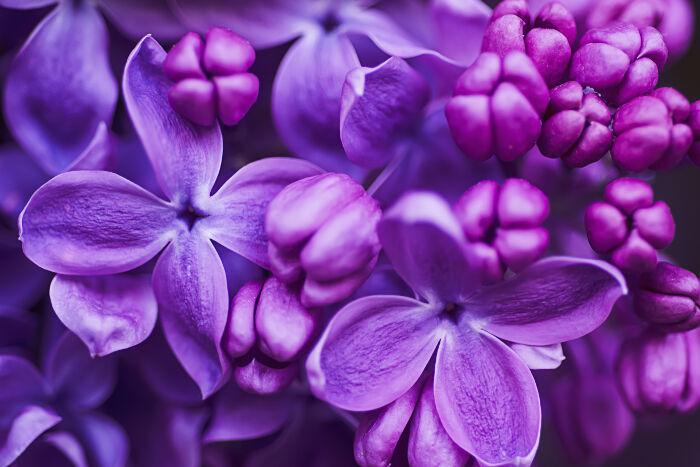 بالصور صور خلفيات ورد , اجمل صور خلفيات ورد وزهور مميزة 5778 8