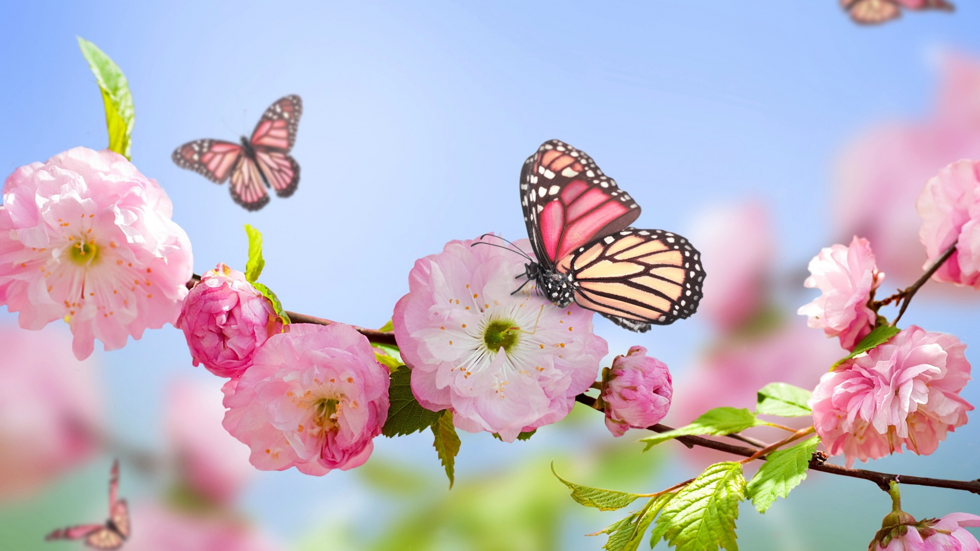 صور صور خلفيات ورد , اجمل صور خلفيات ورد وزهور مميزة