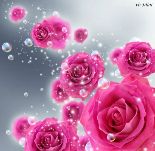 صور خلفيات ورد اجمل صور خلفيات ورد وزهور مميزة احبك موت