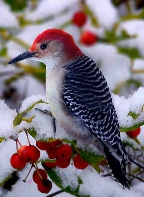 صوره صور طيور , اروع صور طيور جميلة