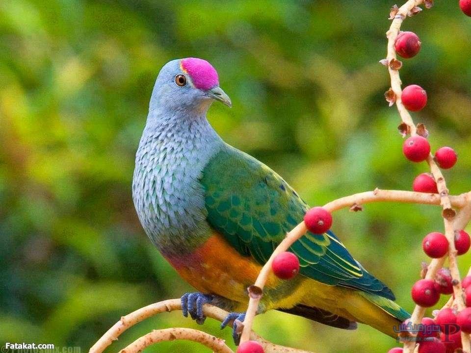 بالصور صور طيور , اروع صور طيور جميلة 5839 2