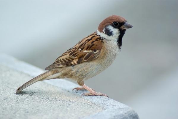 بالصور صور طيور , اروع صور طيور جميلة 5839 3