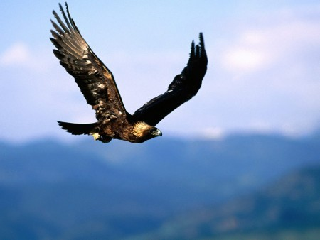 بالصور صور طيور , اروع صور طيور جميلة 5839 4