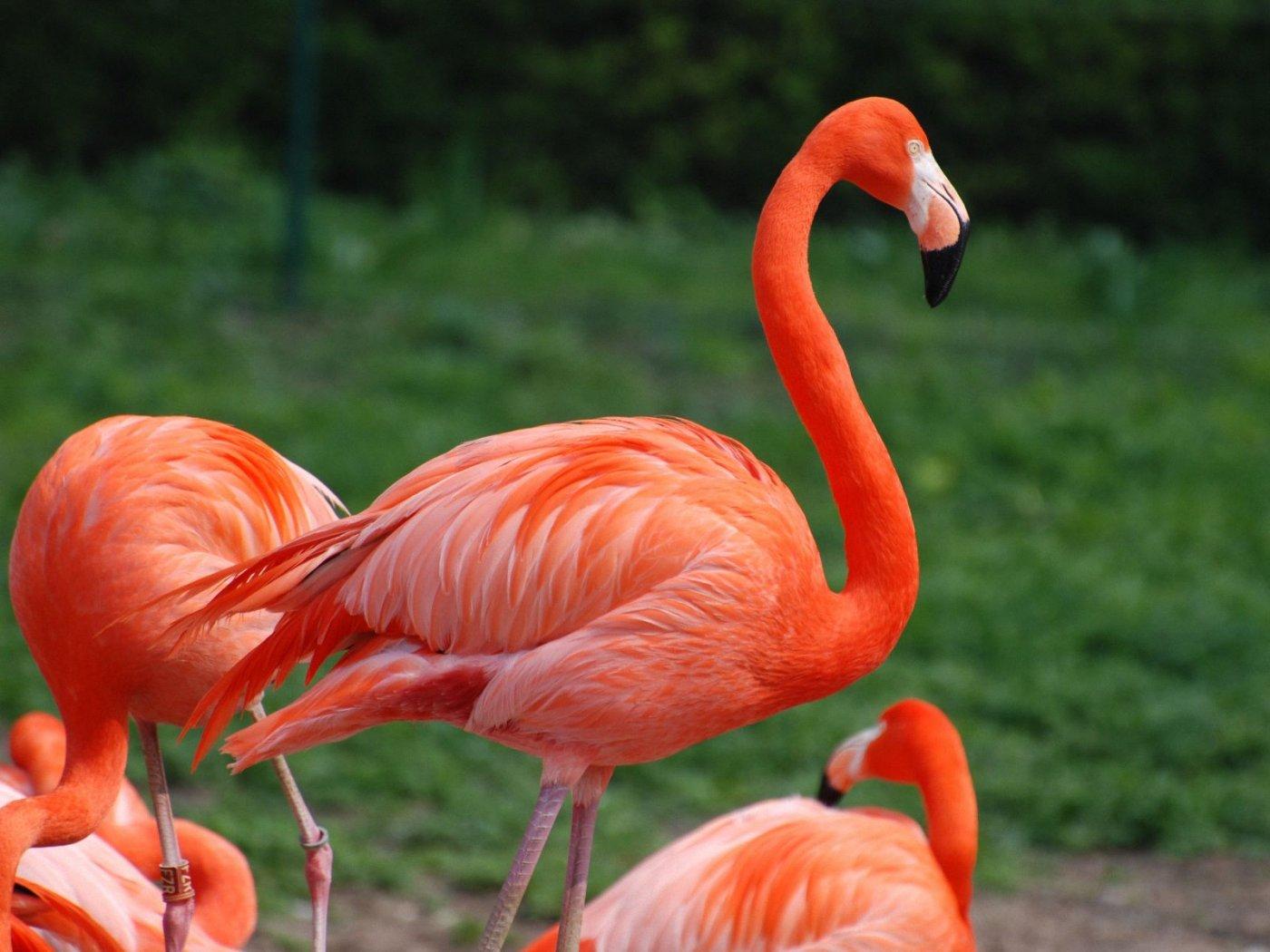 بالصور صور طيور , اروع صور طيور جميلة 5839 5