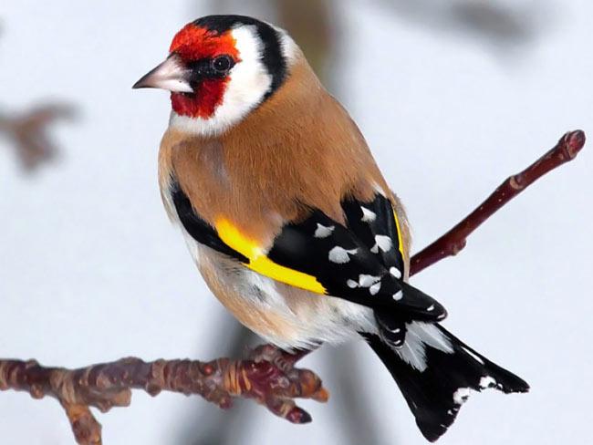 بالصور صور طيور , اروع صور طيور جميلة 5839 6
