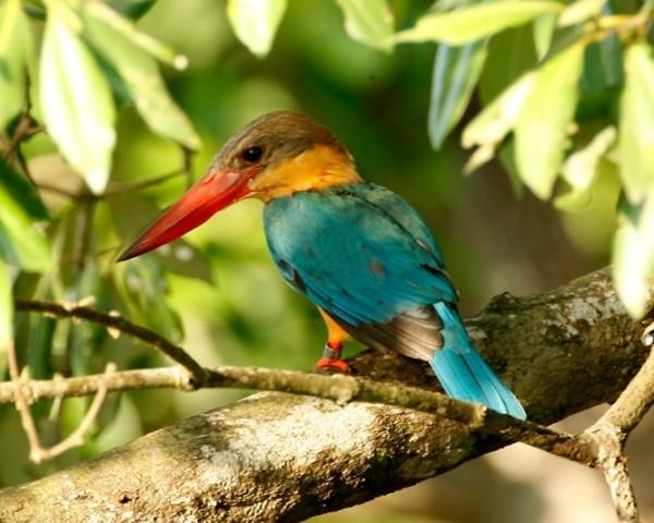 بالصور صور طيور , اروع صور طيور جميلة 5839 7