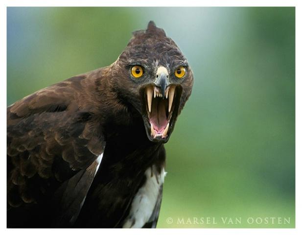 بالصور صور طيور , اروع صور طيور جميلة 5839 8