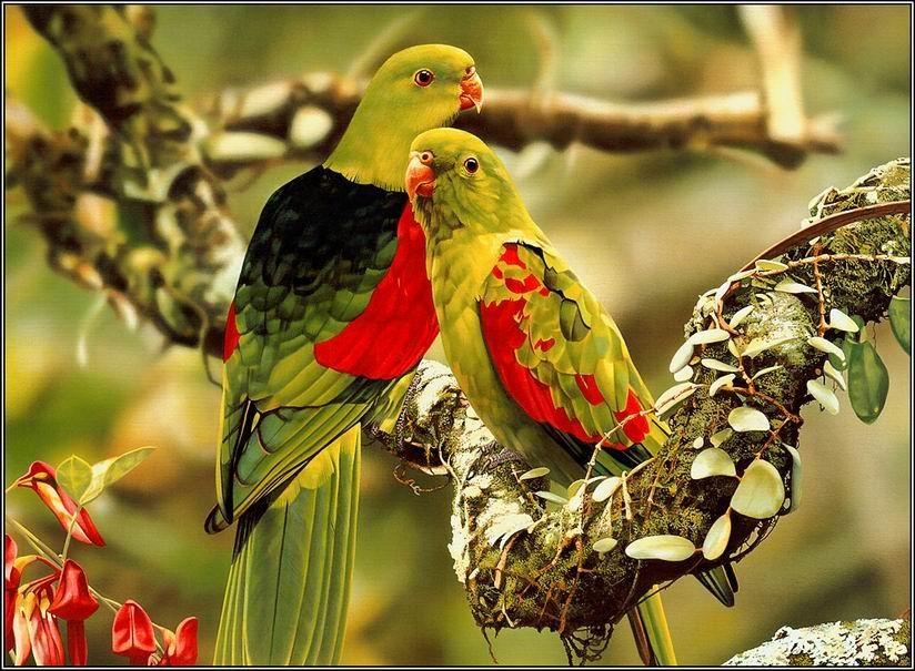بالصور صور طيور , اروع صور طيور جميلة 5839 9