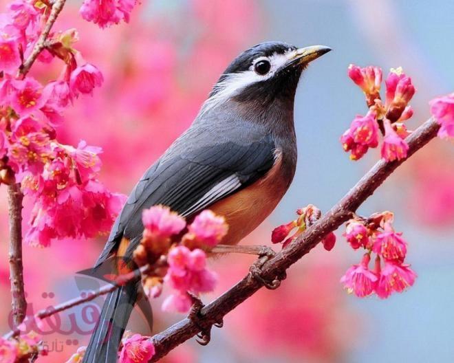 صور صور طيور , اروع صور طيور جميلة