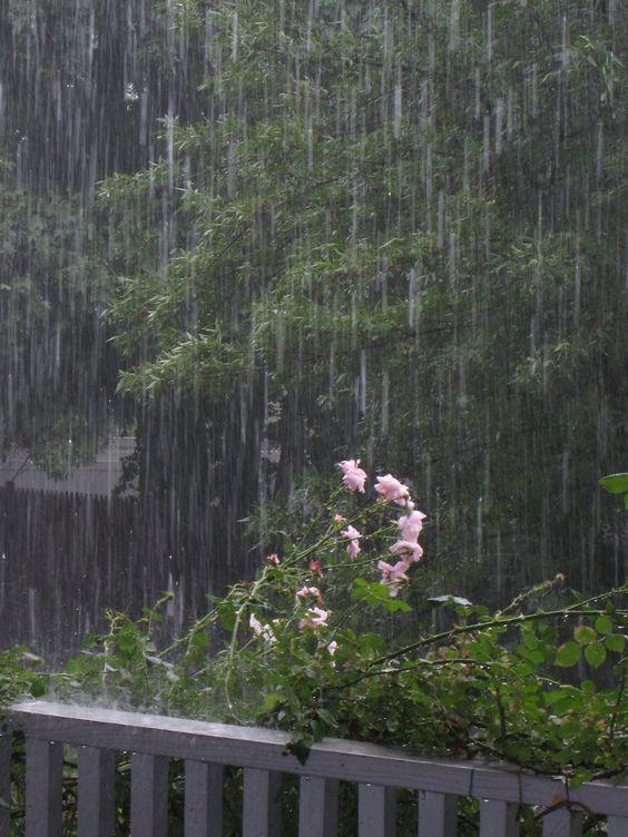 بالصور صور عن المطر , اروع صور عن الامطار 6125 4