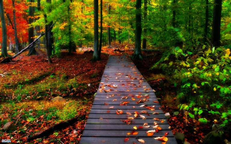 صورة صور طبيعه , احلى صور تراها عينك للطبيعة