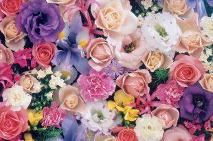 بالصور صور اجمل ورد , خلفيات احلى الازهار الطبيعيه 1572 13 310x205