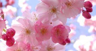صور صور زهور , احلى كروت الورد