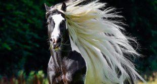 صورة اجمل صور خيول , خلفيات جياد حلوه