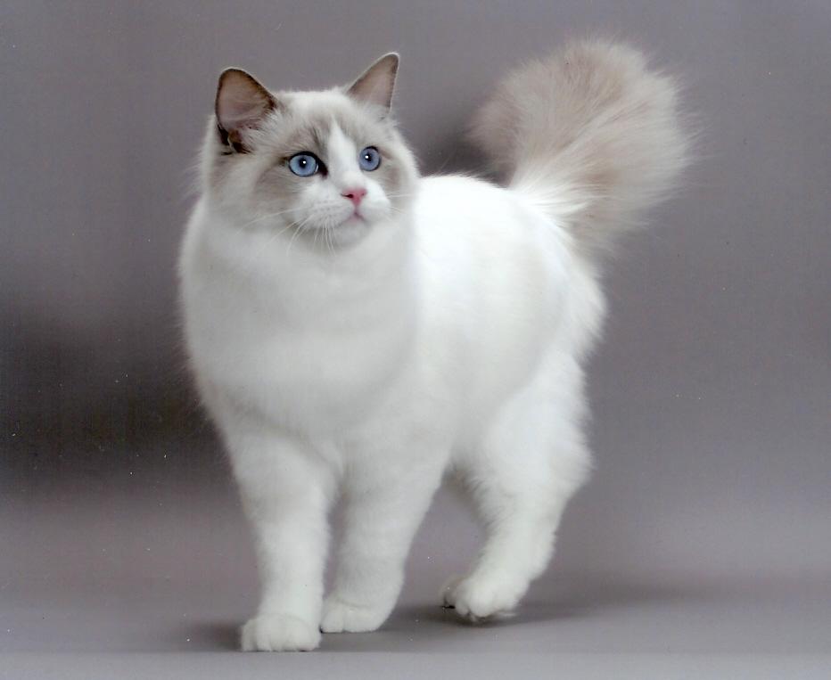 صورة قطط جميلة , احلى واجمل قطط