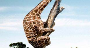 صوره صور حيوانات مضحكة , اجمل صور مضحكة للحيوانات