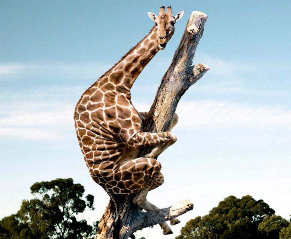 صورة صور حيوانات مضحكة , اجمل صور مضحكة للحيوانات