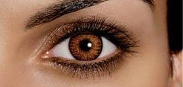 بالصور صور عيون عسليات , اجمل عيون عسليه 2114 9