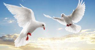 صور صور عن السلام , اجمل صور عن السلم والسلام