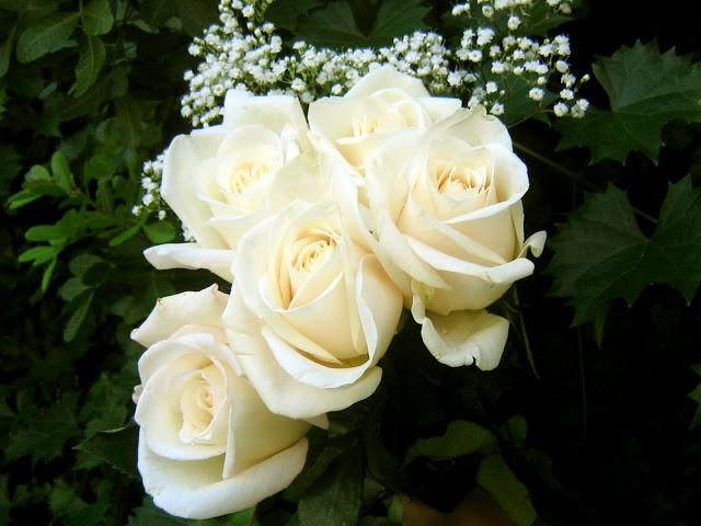صورة صور اجمل الورود , صور ورد جميله ومميزه 2441 3