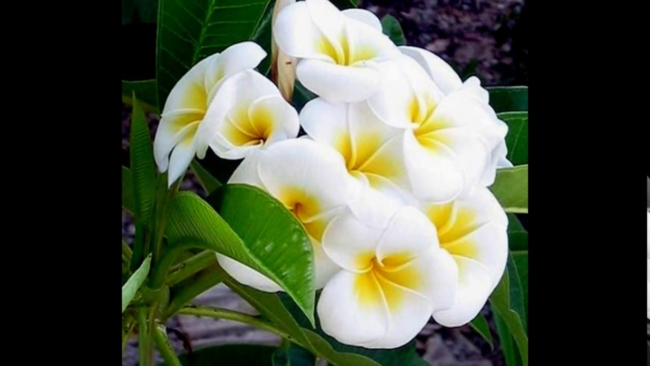صورة صور اجمل الورود , صور ورد جميله ومميزه 2441 9