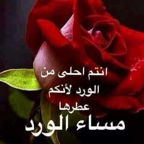 بالصور كلمات عن الورد , الورد واجمل ماقيل فيه 2496 1