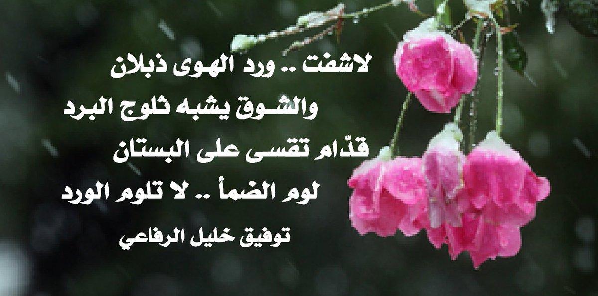 بالصور كلمات عن الورد , الورد واجمل ماقيل فيه 2496 5