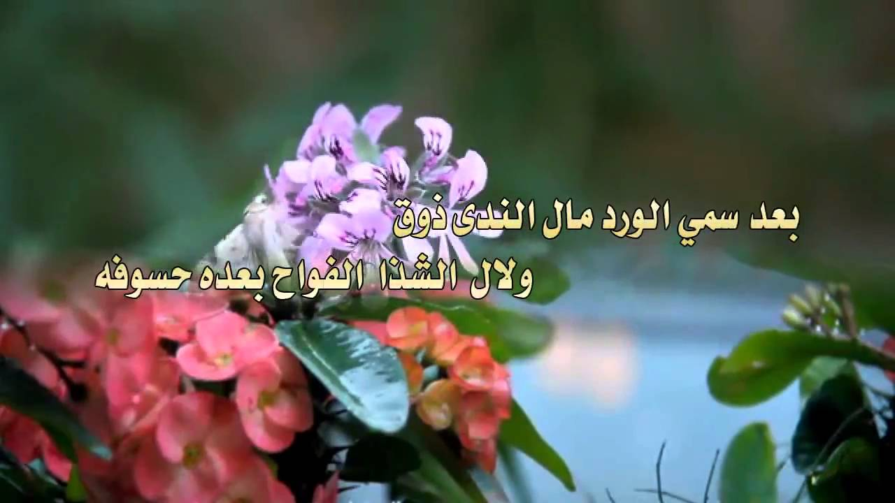 بالصور كلمات عن الورد , الورد واجمل ماقيل فيه 2496 6