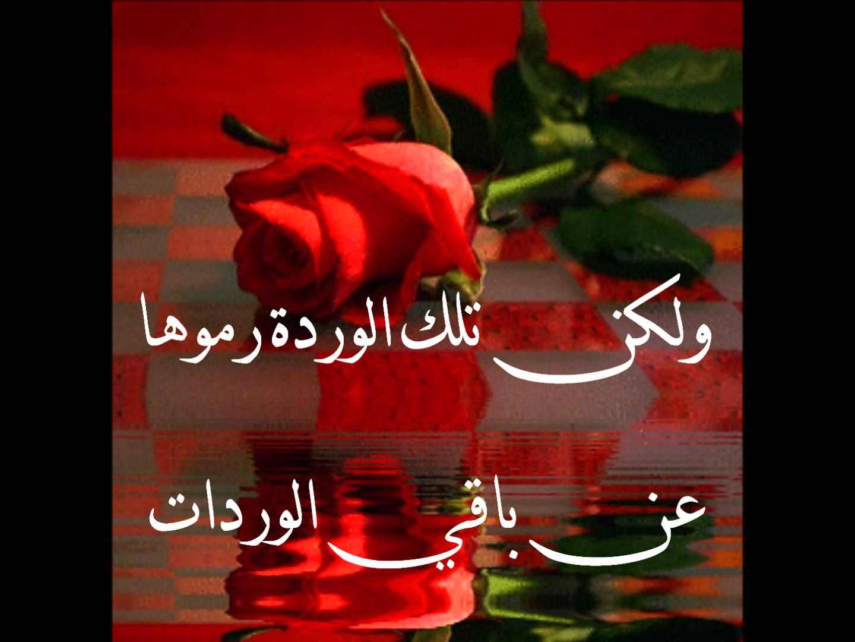 بالصور كلمات عن الورد , الورد واجمل ماقيل فيه 2496 8