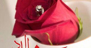 صورة صور مساء الورد , احلى صور المساء الورد