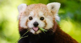 صور حيوانات , اجمل صور للحيوانات