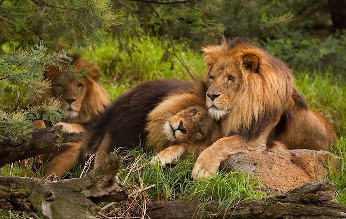 صورة صور حيوانات , اجمل صور للحيوانات