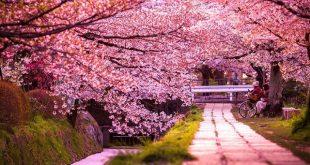 صوره صور طبيعية , اجمل صور للطبيعة