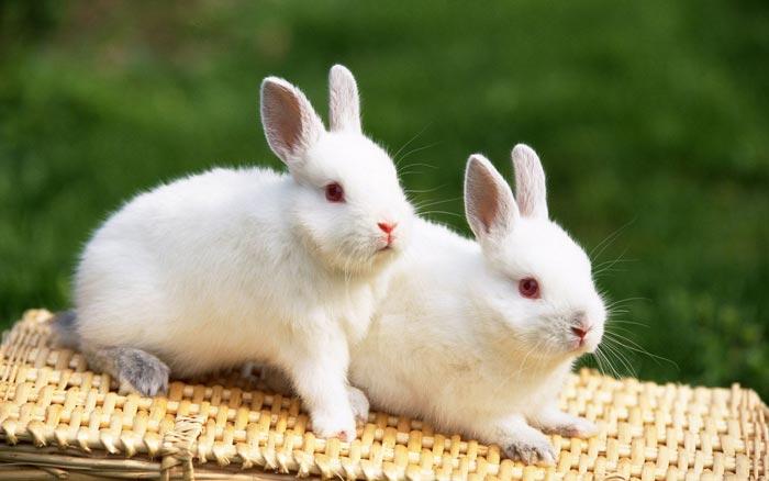 صورة معلومات عن الحيوانات , صور الحيوانات بانواعها