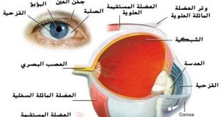 صورة مكونات العين , الاجزاء الداخلية المكونة للعين