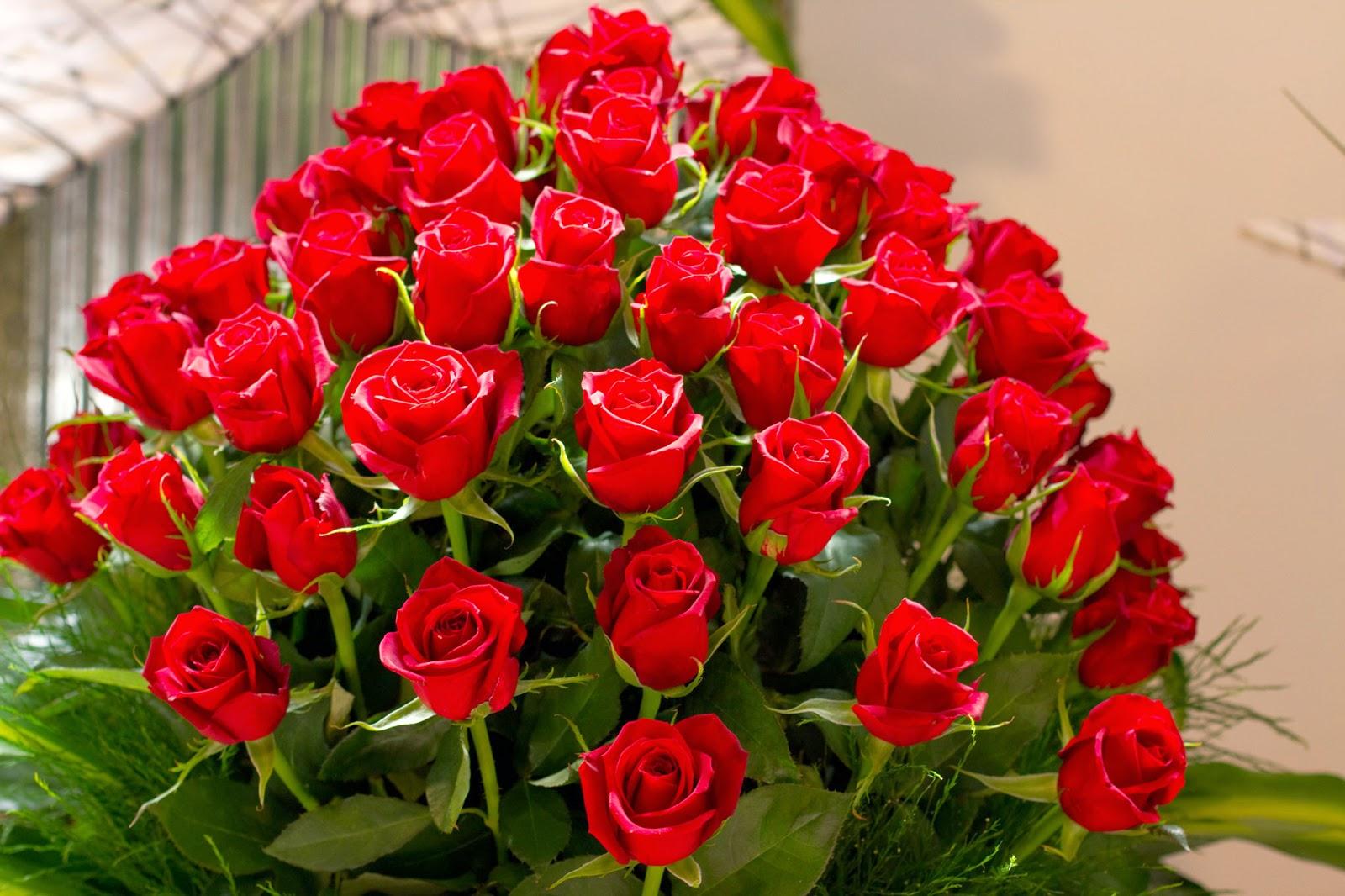 صورة اجمل ورد , اروع الوان الورد 4235 3
