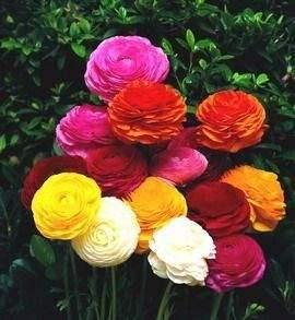 صورة اجمل ورد , اروع الوان الورد 4235 4