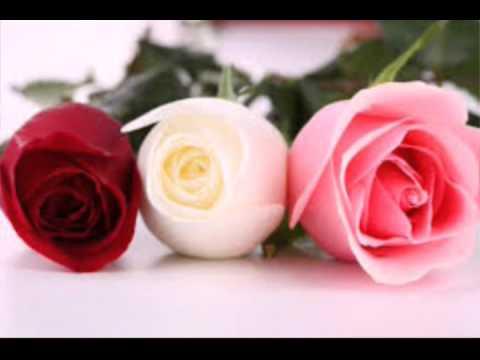 صورة اجمل ورد , اروع الوان الورد 4235 5