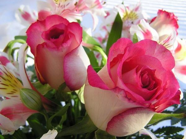 صورة اجمل ورد , اروع الوان الورد 4235 6