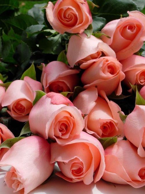 صورة اجمل ورد , اروع الوان الورد 4235 9