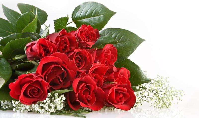 بالصور صور ورود طبيعيه , اجمل اشكال الزهور الطبيعية 4422 4
