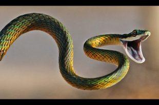 صور تفسير حلم الثعابين في البيت , تفسير ظهور الثعبان فى المنام