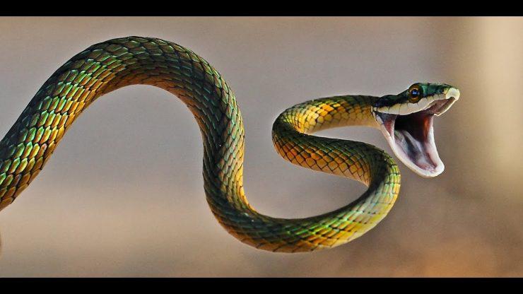 صورة تفسير حلم الثعابين في البيت , تفسير ظهور الثعبان فى المنام