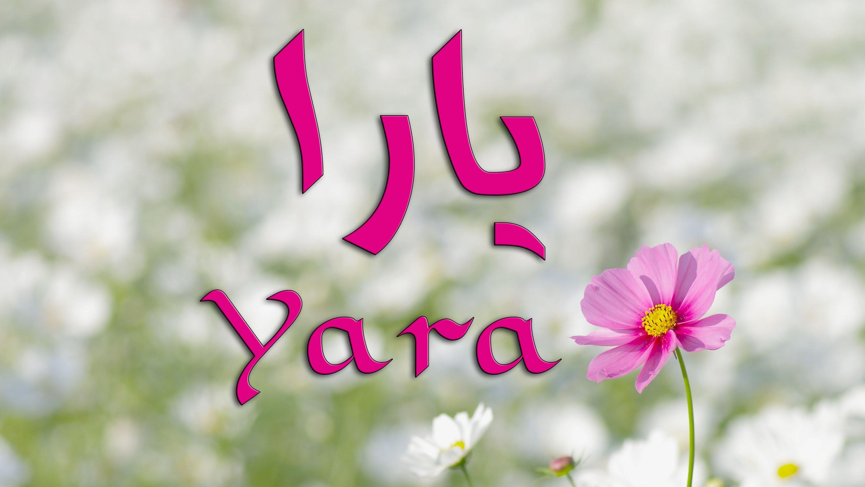 صورة معنى اسم يارا , تفسير اسم يارا